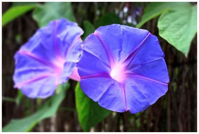 blossom-bloom-flower-purple-53191.jpeg